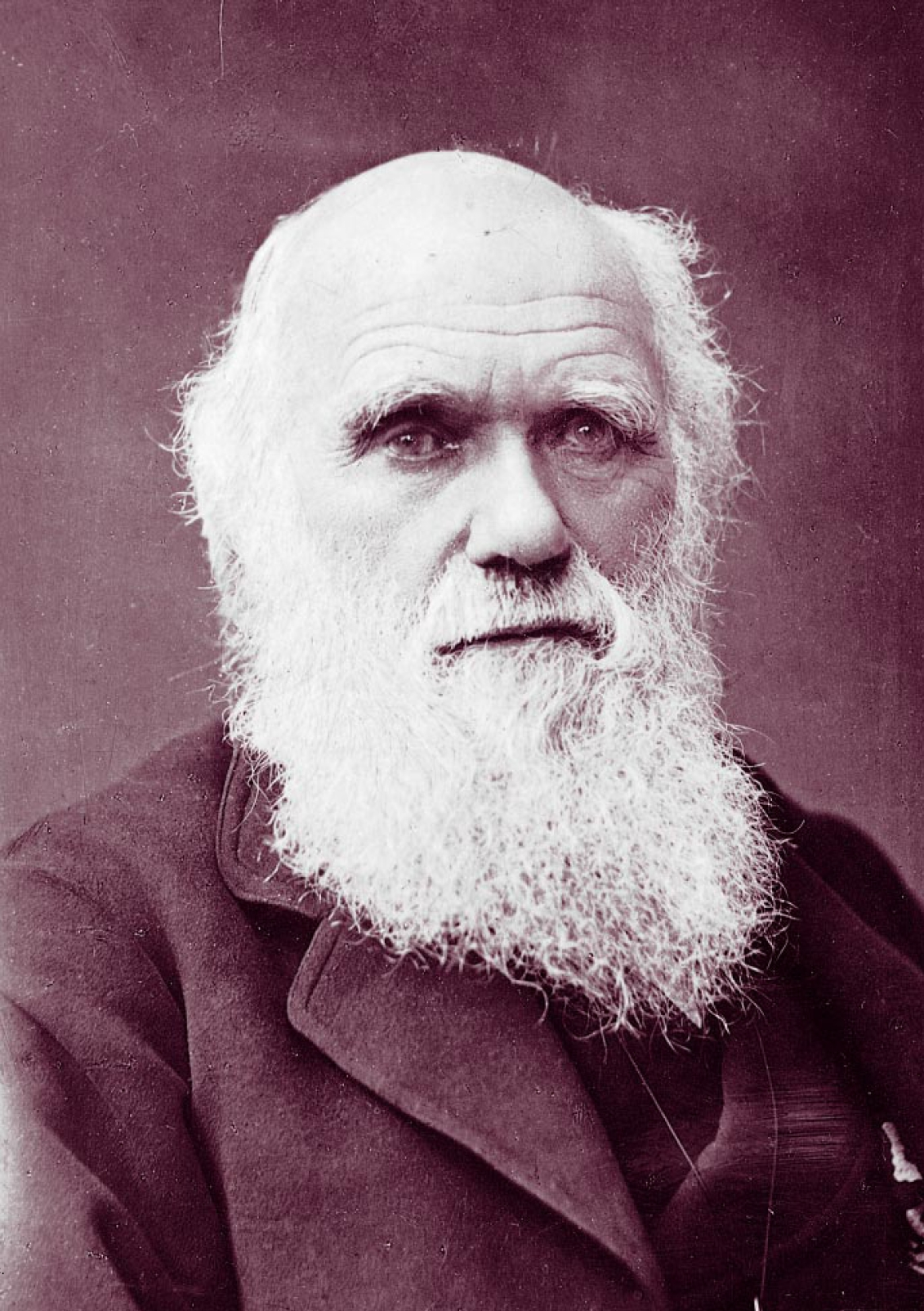 Charles_Darwin_photograph_by_Herbert_Rose_Barraud,_1881_2 -