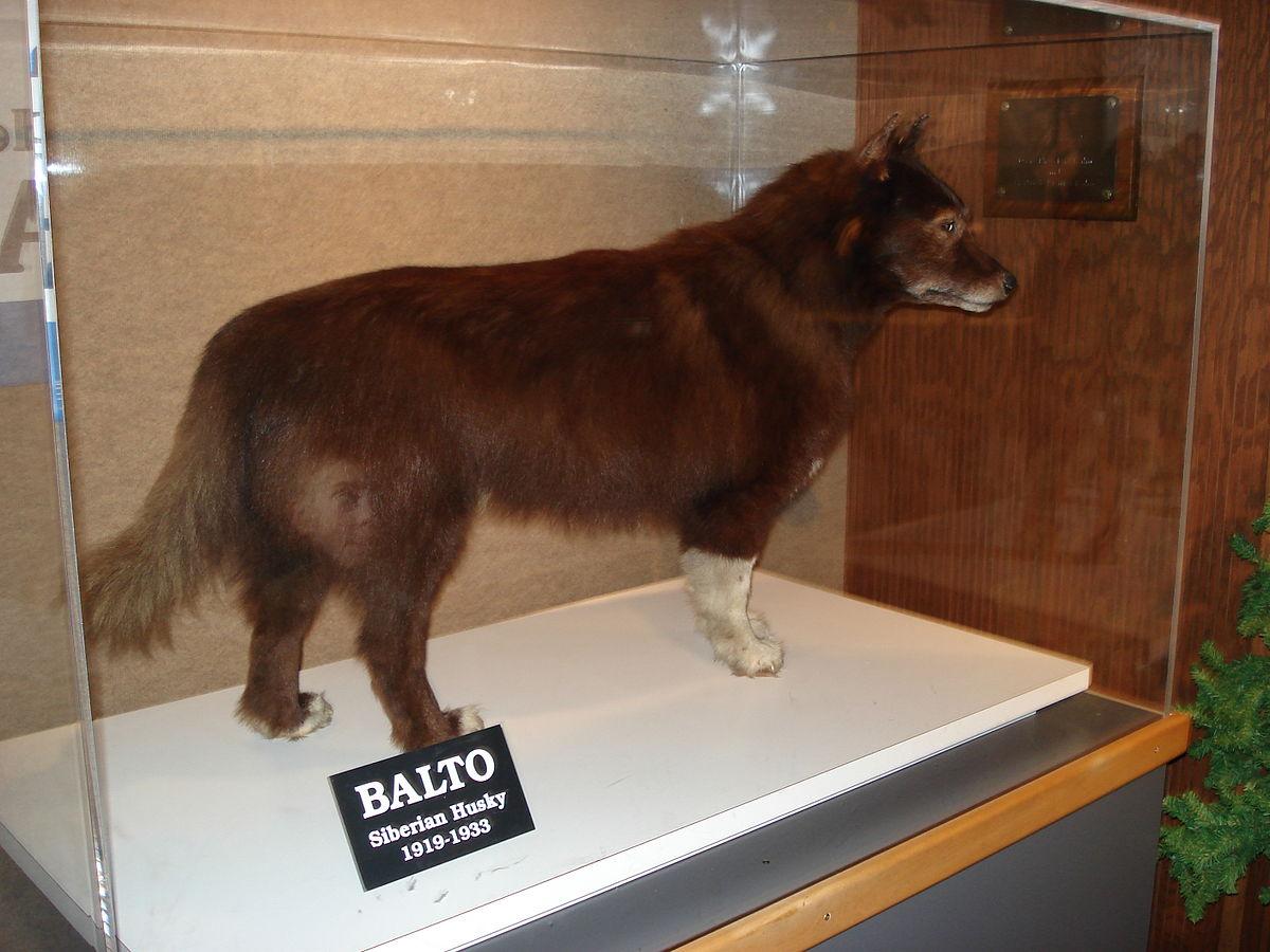 Balto-Museo-de-Cleveland-de-Historia-Natural-History -