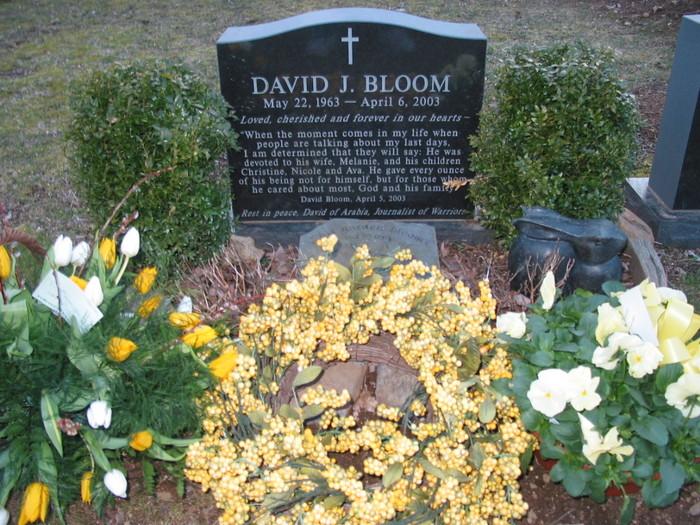 Bloom 1 -